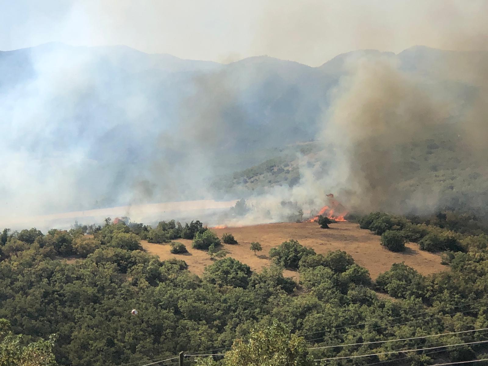 Dersim Türşmek'te Orman Yangını